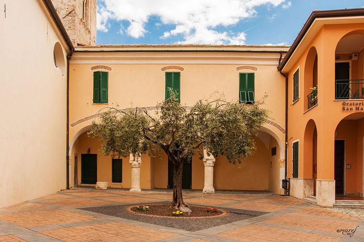 Toirano Liguria Toirano Place Tree Olive Tree Ulivo Albero Piazza