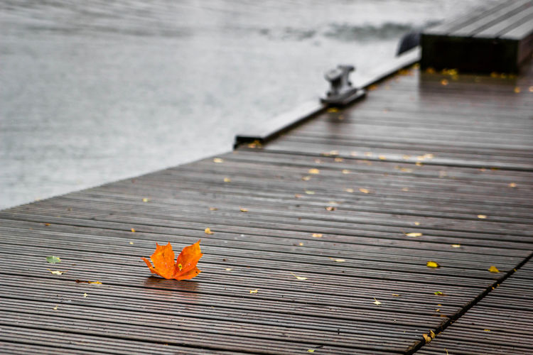 A maple leaf on the pier Autumn Day Fall Colors Leaves Maple Leaf Nature No People Orange Color Outdoors Pier Sea Water
