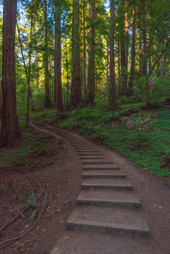 Redwoods Forest Tree Plant Land Direction The Way Forward WoodLand Nature Tree Trunk Trunk Tranquility No People Growth Beauty In Nature Day Non-urban Scene Scenics - Nature Outdoors Tranquil Scene Wood - Material