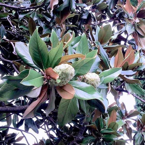 Leaves Autumn Growth Leaf Plant Nature Beauty In Nature Full Frame Petal Herbal Medicine Fragility Backgrounds Abundance