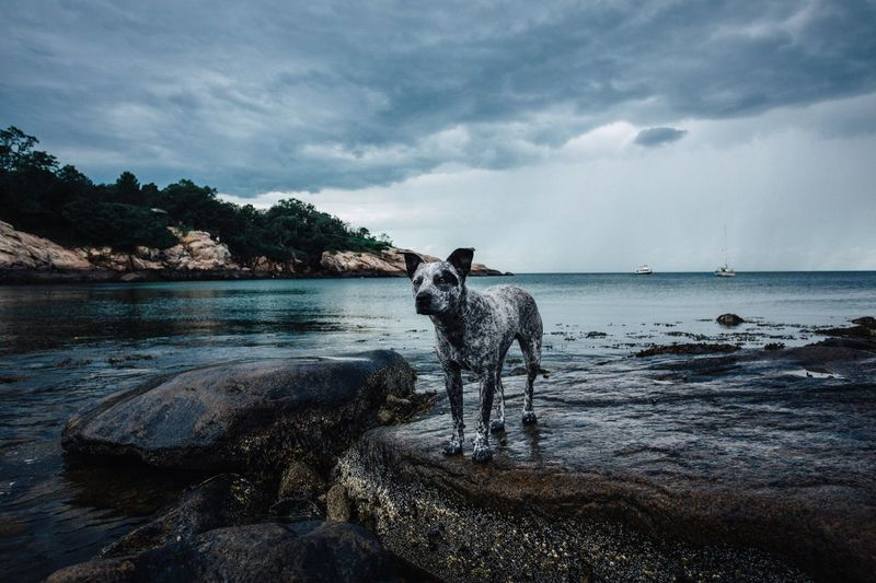 Cloud - Sky Water Dog Pets One Animal Animal Themes Domestic Animals Sky Sea Nature Outdoors Day Beauty In Nature Mammal No People Beach Scenics Horizon Over Water