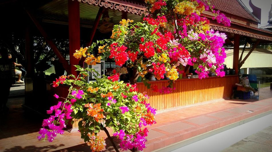The Great Outdoors With Adobe Flowers Rainbow Colors Pallete Alive  Nature Perfume Tropical Warm Colors Thailand Freedom Pink Orange Yellow Iloveflowers Feel The Journey OO Mission Colour Of Life Millenial Pink
