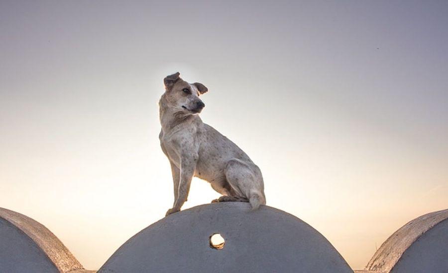 dog run the world #Dogphotography #dogshow #puppyshow #helpingothers #bullys #bully #englishbulldog #тимерташ #среднеазиатскаяовчарка #собака #щенки #щенок #doglover #doginstagram #instapuppies #instagram #pappy #alabay #alabai #timertash #cao #kennel #kennelclub #russia #сао #animals #жи #doggies #doglover My Best Travel Photo Blackandwhite #Doglife #Dog #pet #dog #Dogs Of EyeEm #dogs Lightness