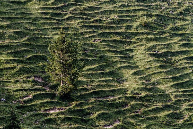Lines on a mountain formed by cows having walked over the same paths for years Bavaria German Graphic Grass Green Green Color Lines Spruce Tree Agriculture Alps Animal Backgrounds Beauty In Nature Day Environment Europe Full Frame Green Color Growth High Angle View Land Lines And Shapes Mountain Nature No People Outdoors Pattern Plant Plant Part Scenics - Nature Tree Treee