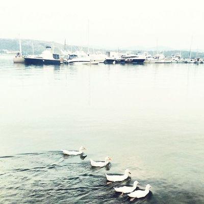 Τα παπάκια στη σείρα πως χορεύουνε τρελά μεσ'της λίμνης τα νερά. Ducks Water Blue Boats Lovelovelove Summer2015 Summerishere Havingfunwithangels Nelly Antonis Mika Marietta Ioanna 😚
