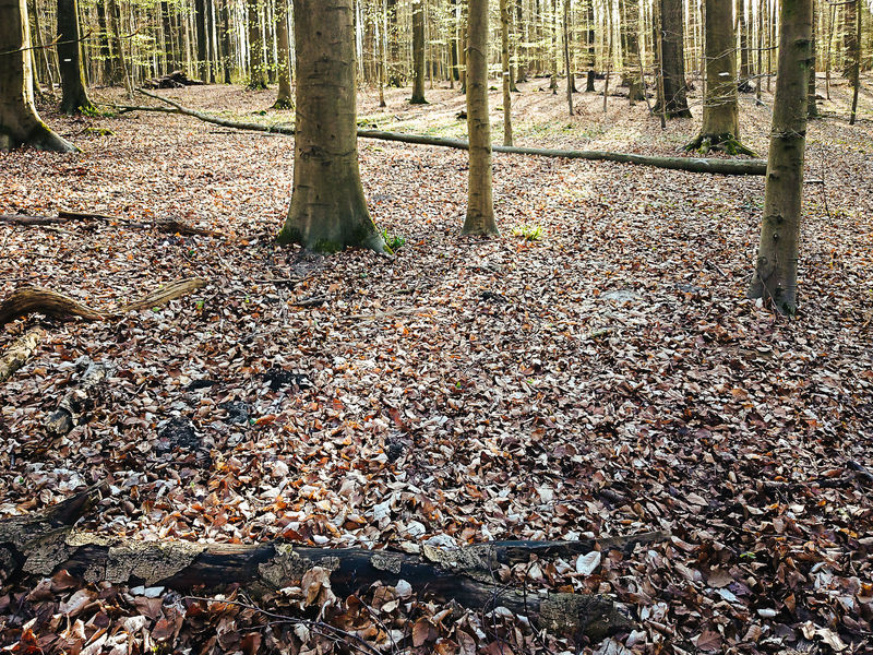Autumn Bare Trees Beauty In Nature Change Day Fall Forest Leaf Leaves Nature No People Outdoors Scenics Shadow And Light Sonian Forest Sunny Day Tree Tree Trunk Trunks Winter Wintertime First Spring The Secret Spaces