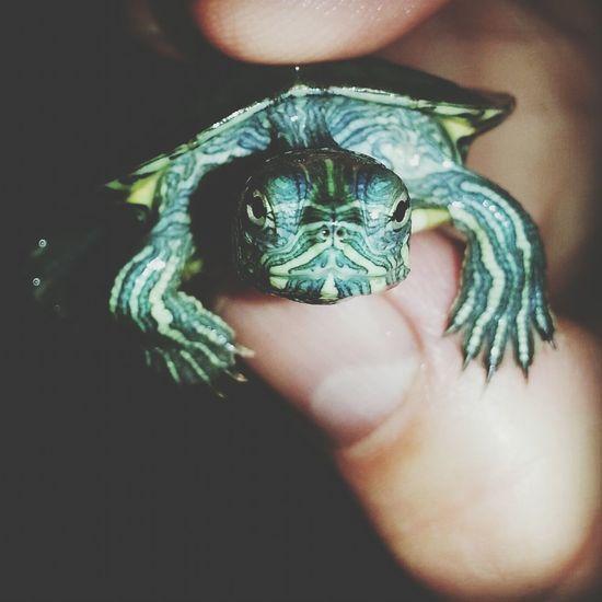 Sukaplumbağası Tatlilik Abidesi