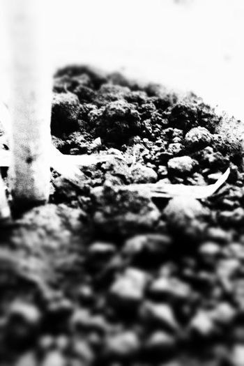 B&W Ananya's Gallery Nature Beauty In Nature Photography DSLR Plants Nature Photography Canonphotography EyeEmNewHere Nature_collection Nature Is Art Naturelovers Garden Canon Canoneosrebelt6i Canon_photos EyeEm Nature Lover Soil Soil On The Ground Rocks B&w Black Blur Blurred Motion Blurred Plants 🌱 Plants Collection Black And White Textured  Close-up