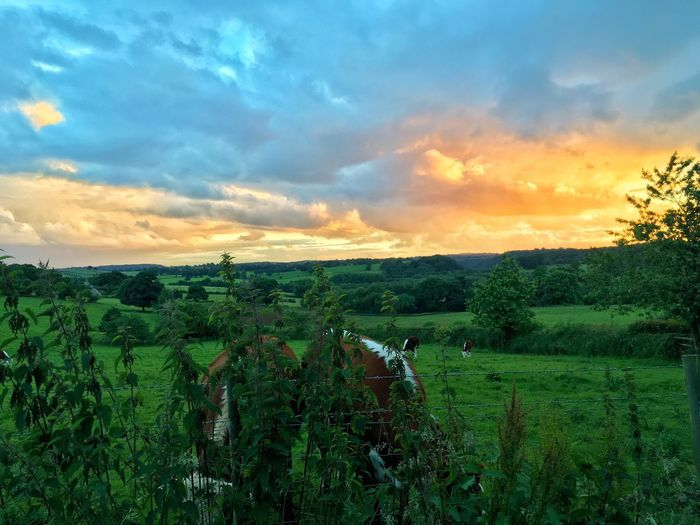 43 Golden Moments Staffordshire Thefarmonthehill