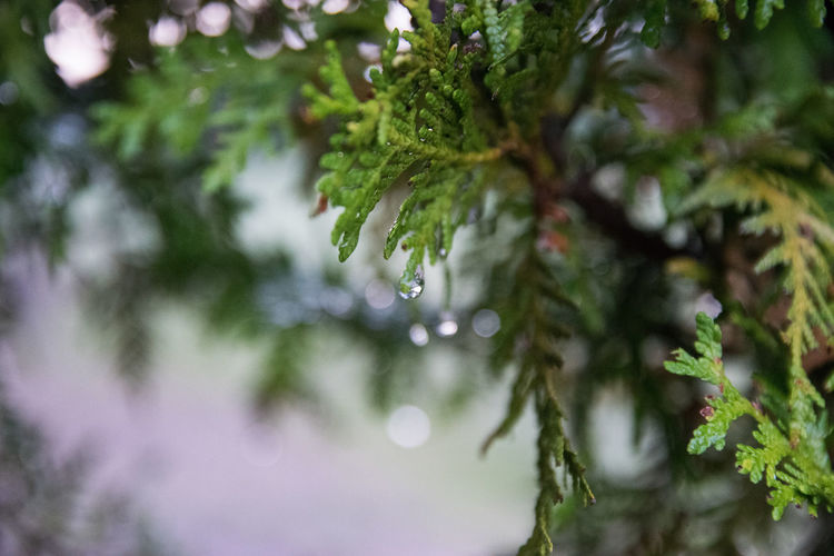 Beauty In Nature Branch Close-up Day Drop Focus On Foreground Fragility Freshness Growth Nature No People Outdoors Plant RainDrop Tree Water Wet