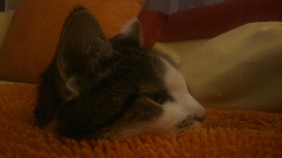 Mona <3 Catlovers Cat♡ Taking Photos Relaxing Lazy Day Enjoying Life Hello World Pure Photo Cats