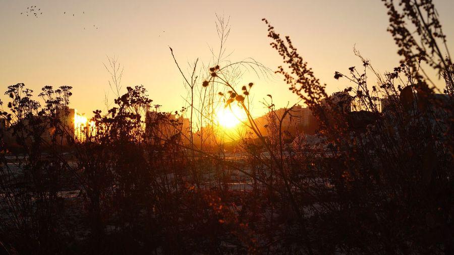 Fire Burning Home Sunset Winter Wintertime Colors Bright Winter Sun