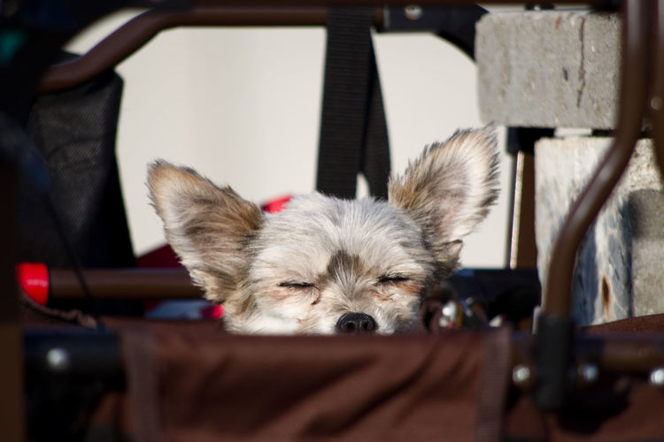 snoozing in the sun Dogs Part Of Sunny Waiting Animal Themes Bag Dog Ears Headshot Outdoors Pentax Pets Sleeping