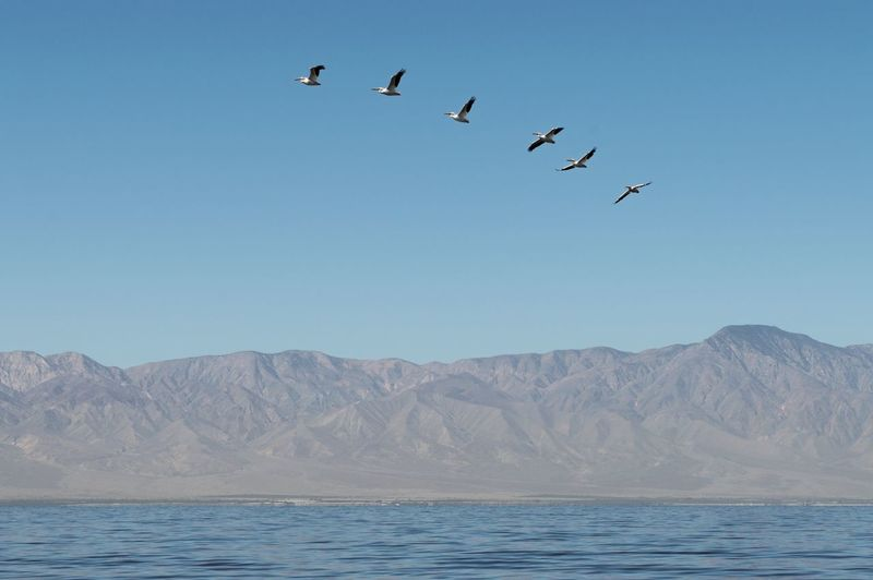 Birds flying over mountains against clear sky