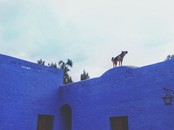 dog found on roof tops of Peru Snow Mountain Sky Architecture