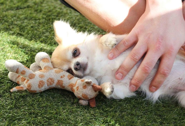 Midsection of person playing with dog