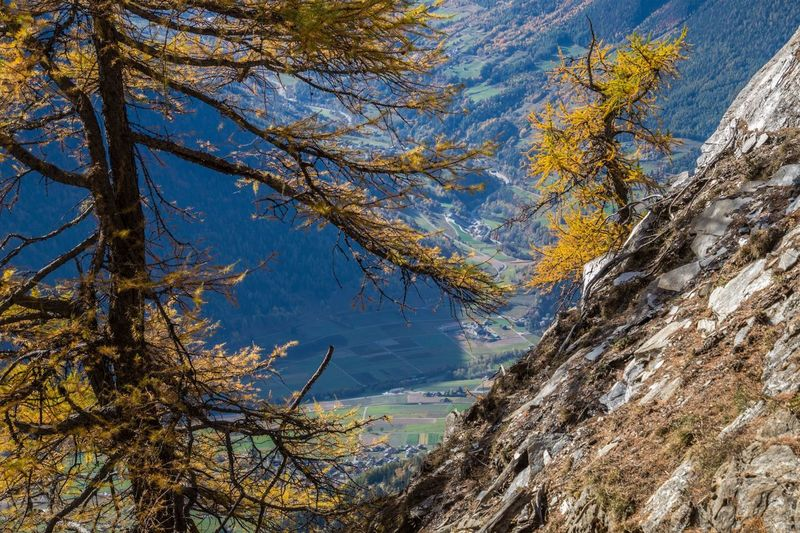 col of lien,valais,swiss Tree Plant Beauty In Nature Tranquility No People Mountain Autumn Nature Scenics - Nature Branch Day Tranquil Scene Mountain Range Sky Outdoors Land Tree Trunk Trunk Low Angle View Non-urban Scene Change Formation