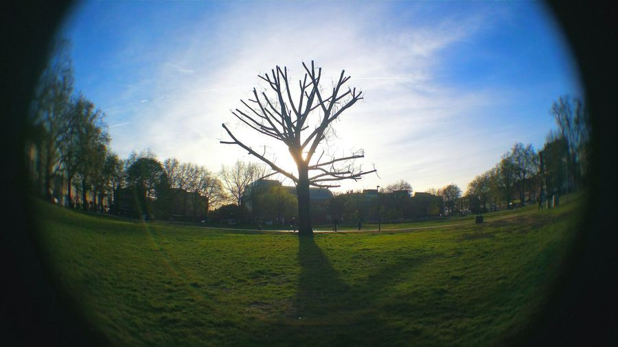 Stand out... Nature's Diversities Enjoying The Sun Park View Fisheye Lens Fisheyevisions Fisheye View Fisheye View Of Tree Light And Shadows Sunrise And Sunsets Sunset Silhouettes Sun Tree And Sky Focus Point Focused Blur Looking Through Glass Park - Man Made Space Tree Silhouette Single Tree London Telling Stories Differently