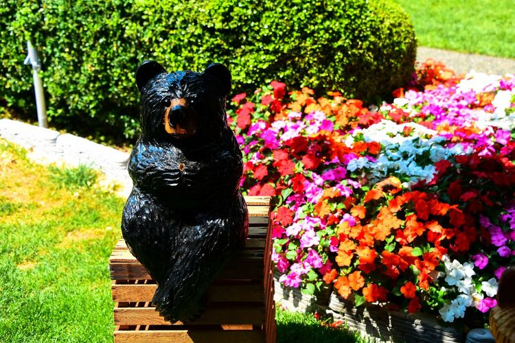Art And Craft ArtWork Bear Art Canada Chemainus Eyes Sculpture Vancouver Island