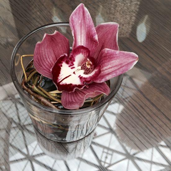 Flowers Orchids Floriculture IKEBANA