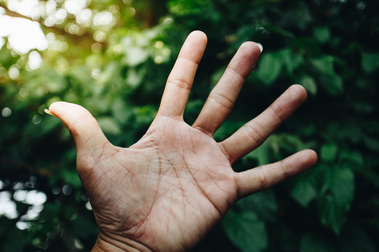 Close-up of person hand showing stop gesture against trees