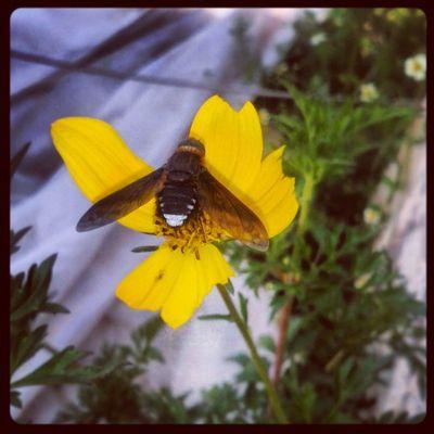 Raro el insectos