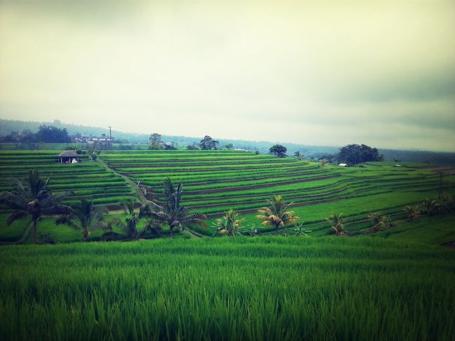 Serenity amidst rice terraces in Jatiluwih, Bali. Amazing what being in touch with nature does for you. I Love BALI