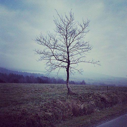 Лемківщина лемки гори карпати дерево бескид lemko góry Beskid drzewo