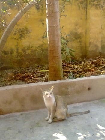 Cat Domestic Domestic Animals Domestic Cat Feline Mammal Nature No People One Animal Outdoors Pets Plant Sitting Tree Vertebrate