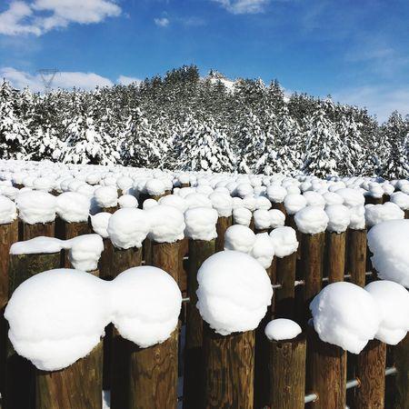 Snowballs Snow Snow ❄ Perfectphoto Beautifully Organized BestofEyeEm Bestoftheday Firsteyeemphoto Best EyeEm Shot First Eyeem Photo