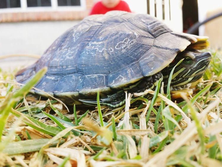 Turtle Animals Hello World
