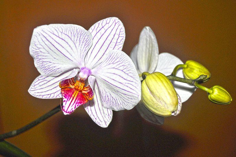 Orquideas❤ My Garden Flowers_collection Orchid Blossoms Beautiful Nature Flowerporn Orquideas💞 Pindamonhangaba Brazil