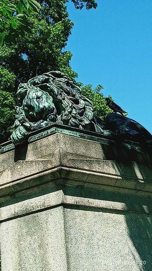lion 🦁 slept