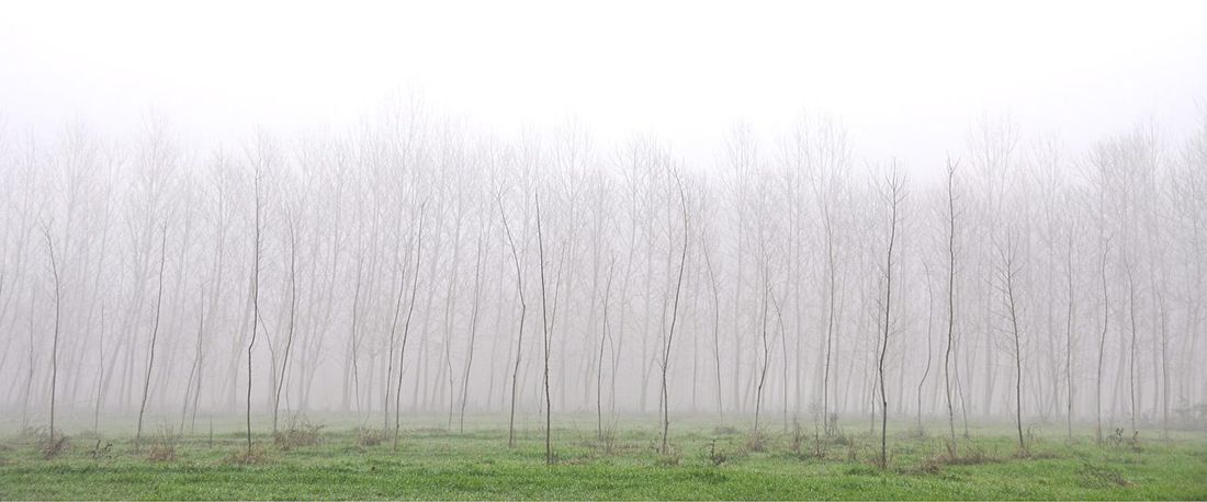 Beautifully Organized Nature Beauty In Nature Outdoors Foggy Morning Perspectives On Nature