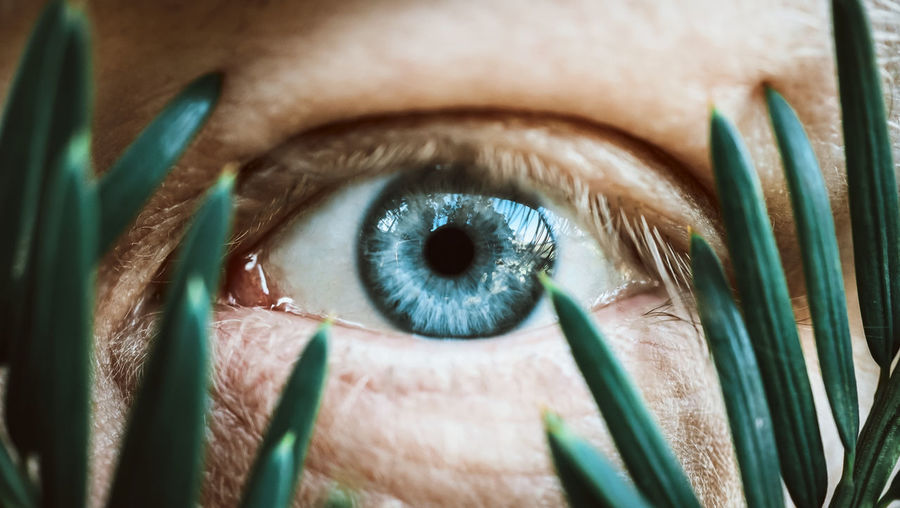 Close-up portrait of human eye seen through plants