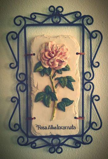Flower White Background Taking Photos Photography Photographer Kanyn Puerto Rico Puertorico EyeEm Photo Eyeem Photography EyeEm Gallery Eyeem Photography Roses Rose🌹 Ceramic