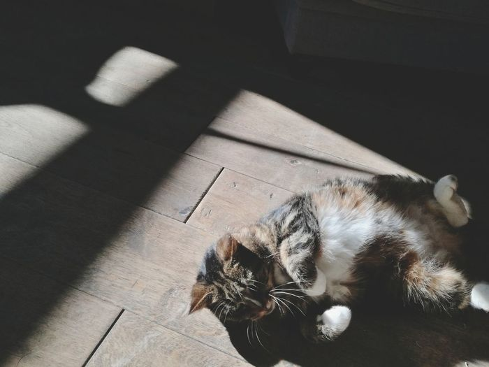 chilling 😺 Sunshine Cat Domestic Animals High Angle View Indoors  Shadow No People Day Close-up Domestic Cat Pets Animal Themes One Animal Lying Down Sleeping Wood - Material Relaxation Mammal