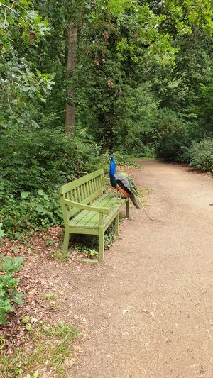 Rear view of man on bench in forest