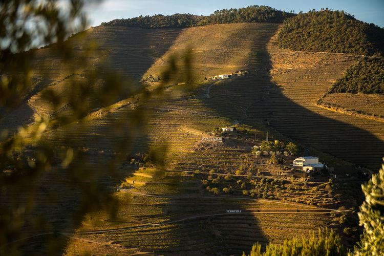 Douro  Douro River Portugal Porto Portugal Vineyards  Douro River Travel Destinations Vineyard