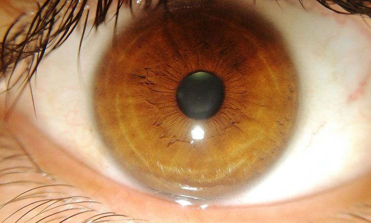Mi ojo... 👀 Eye Ojo Mirada  Pupila Iris Retina Loocking Pestana