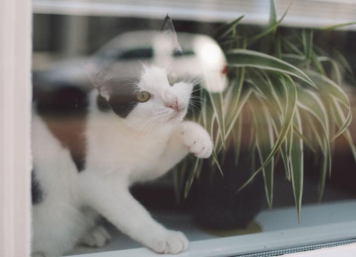 Close-up of cat touching glass window