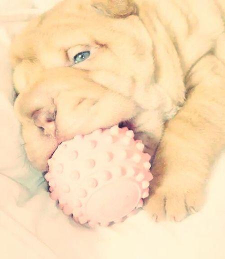Everyday Joy Dog