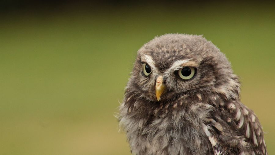 Close-up of owl