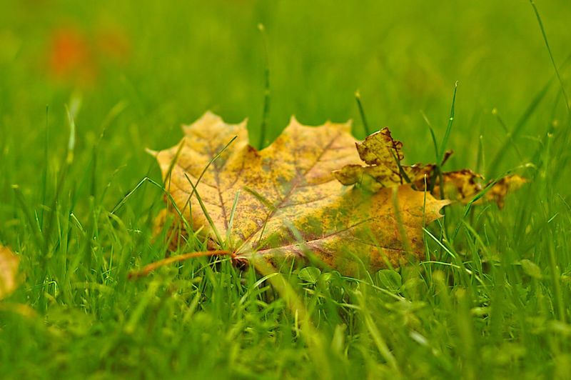Autumn Beauty In Nature Close-up Day Field Grass Green Color Leaf Nature No People Outdoors Selective Focus