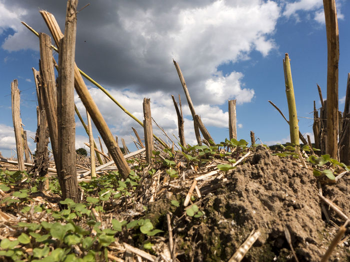 Autumn Farmland Field Blade Blue Cloud - Sky Clouds Clouds And Sky Countryside Crop  Dry Halm Harvest Rural Scene Sky Spear Stoppelfeld Straw Stubble Stubble Field