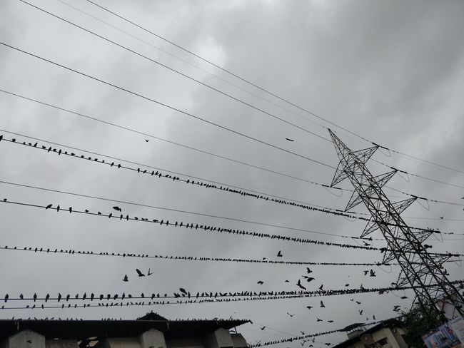 Animal Animal Themes Architecture Built Structure Cable Cloud - Sky Connection Day Electricity  Electricity Pylon Flock Of Birds Low Angle View Nature No People Outdoors Power Line  Power Supply Sky Technology Telephone Line Vertebrate