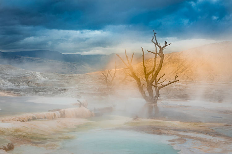 Bare tree by hot springs against cloudy sky