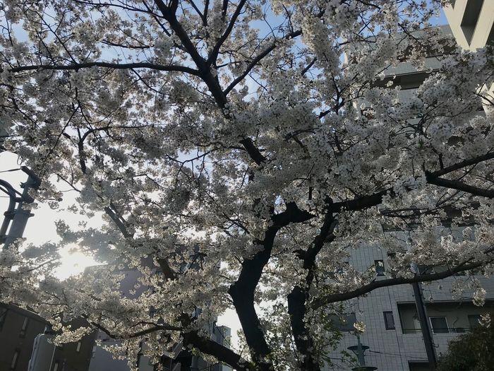 Kuramae Japan