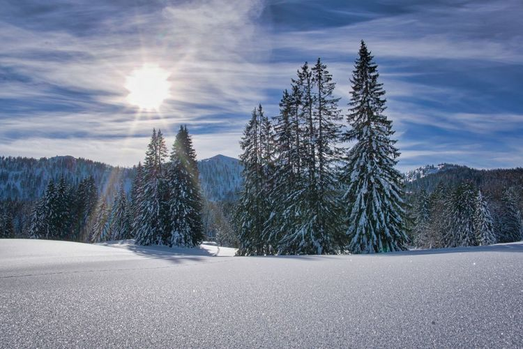 snow landscape in winter Tree Snow Mountain Forest Spruce Tree Winter Cold Temperature Pine Tree Pinaceae Sunlight Coniferous Tree Evergreen Tree Fir Tree Pine Woodland Needle - Plant Part Snowcapped Mountain Arctic Pine Wood Glade Tree Area Ski Jacket Frost Eastern Europe WoodLand Idyllic Needle Forest Fire Polar Climate Treetop Countryside