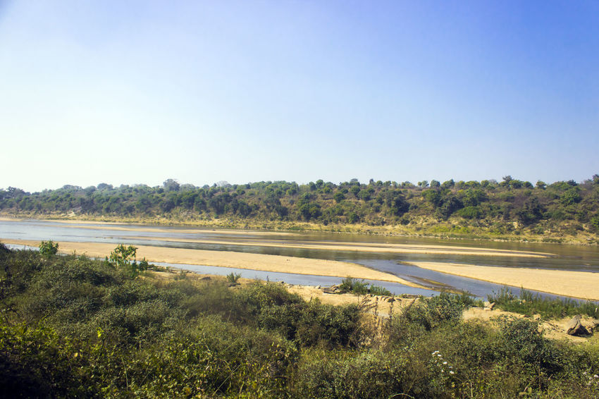 Damodar river, dhanbad, jharkhand, india. Dhanbad EyeEmNewHere Indian River Jharkhand River View Riverside Beach Clear Sky Damodar River Day Incredible India Indian Summer Jungle Lake Landscape Nature No People Outdoors River Riverbank Riverscape Sand Sky Tree Water